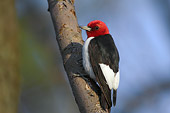 BRD 25 TK0003 01