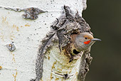 BRD 25 TL0003 01