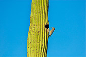 BRD 25 TL0005 01