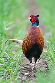 BRD 26 AC0005 01