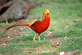 BRD 26 BA0001 01