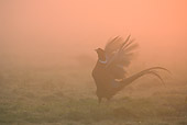 BRD 26 WF0001 01
