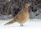 BRD 26 WF0003 01