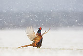 BRD 26 WF0005 01