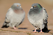 BRD 27 AC0006 01