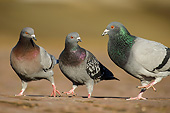 BRD 27 AC0007 01