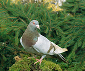 BRD 27 GL0001 01