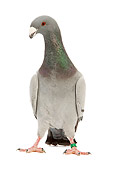 BRD 27 JE0002 01