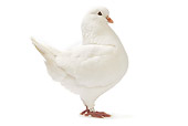 BRD 27 JE0005 01