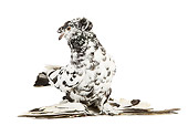 BRD 27 JE0010 01