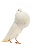BRD 27 JE0012 01