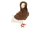 BRD 27 JE0014 01