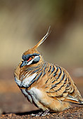 BRD 27 MH0001 01