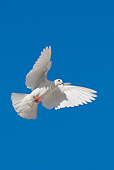BRD 27 KH0001 01