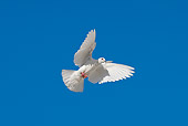 BRD 27 KH0002 01