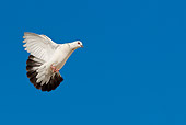 BRD 27 KH0004 01