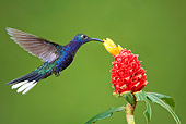 BRD 28 JZ0001 01