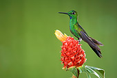 BRD 28 JZ0005 01