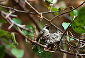 BRD 28 RK0001 02