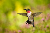 BRD 28 TK0001 01