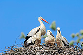 BRD 29 AC0014 01