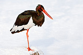 BRD 29 AC0015 01