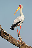 BRD 29 AC0025 01