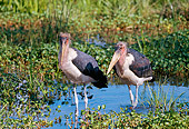 BRD 29 GL0001 01