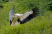 BRD 29 GL0002 01