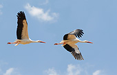 BRD 29 GL0004 01