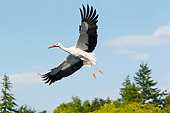 BRD 29 GL0005 01