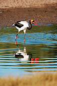BRD 29 HP0003 01