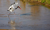 BRD 29 HP0004 01