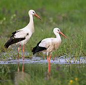 BRD 29 KH0001 01