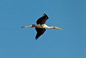 BRD 29 KH0006 01