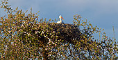 BRD 29 KH0008 01