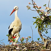 BRD 29 KH0009 01