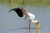 BRD 29 MC0002 01