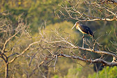 BRD 29 MC0004 01