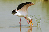 BRD 29 MC0005 01