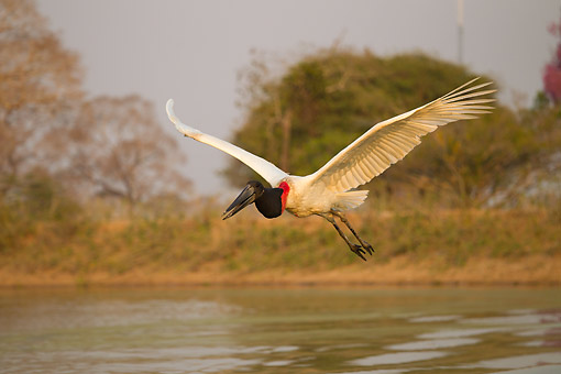 BRD 29 MC0006 01