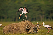BRD 29 MH0001 01