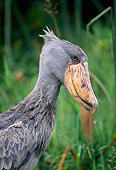 BRD 29 MH0017 01