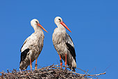 BRD 29 WF0001 01
