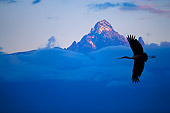 BRD 29 JZ0003 01