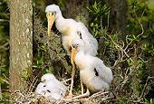 BRD 29 LS0001 01