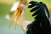 BRD 29 LS0002 01
