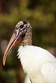 BRD 29 LS0003 01