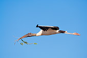 BRD 29 LS0004 01