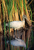 BRD 29 LS0005 01